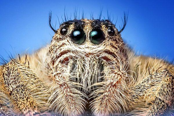 araña peluda y fea