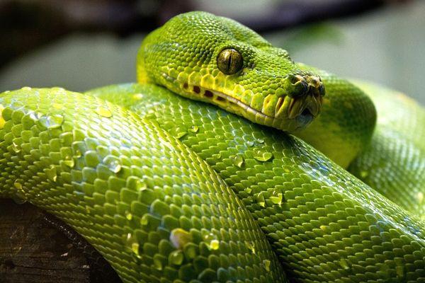 significado de soñar con serpientes verdes