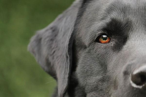 sueños con un perro negro