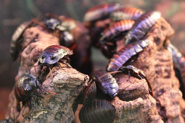 soñar con plaga de cucarachas