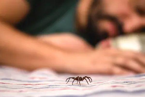 sueños con arañas en la cama