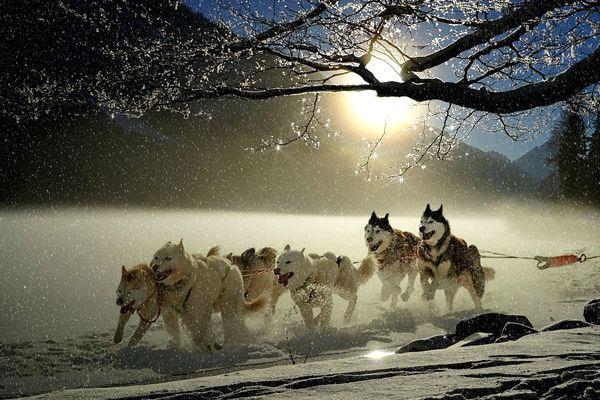 soñar con perros que te persiguen