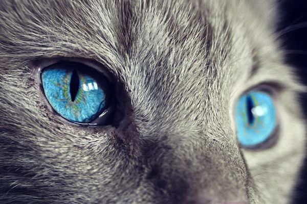 significado de soñar frecuentemente con gatos