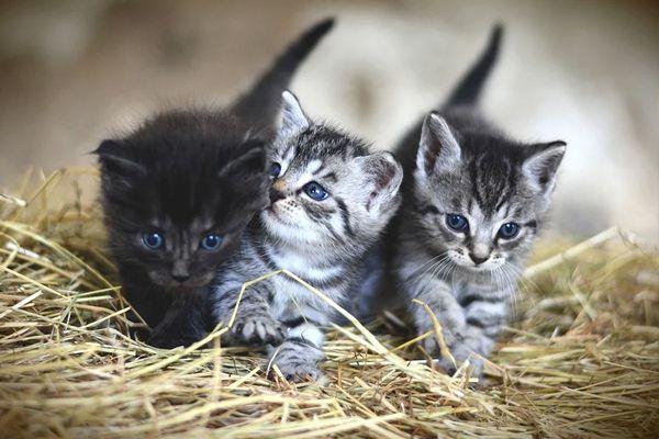 gatos bebés y los sueños