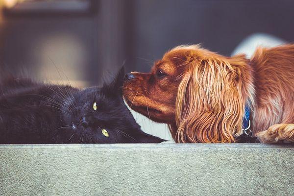 sueños con perros y gatos