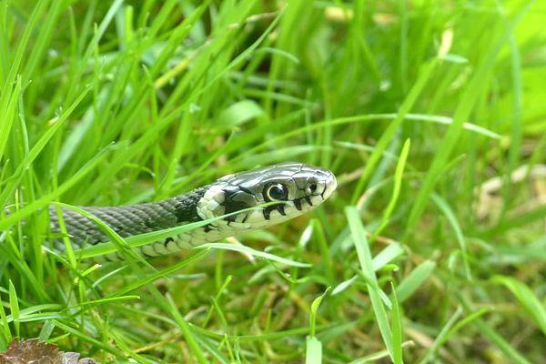 serpiente que sale debajo de la tierra