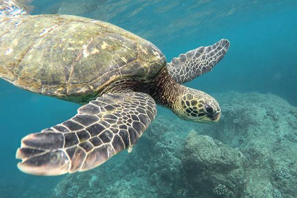 sueños con tortugas en el agua