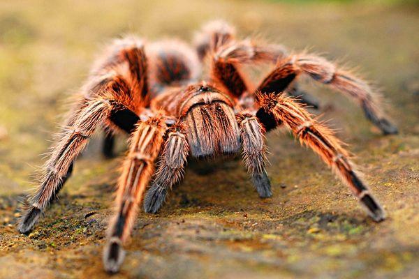 significado de soñar frecuentemente con arañas