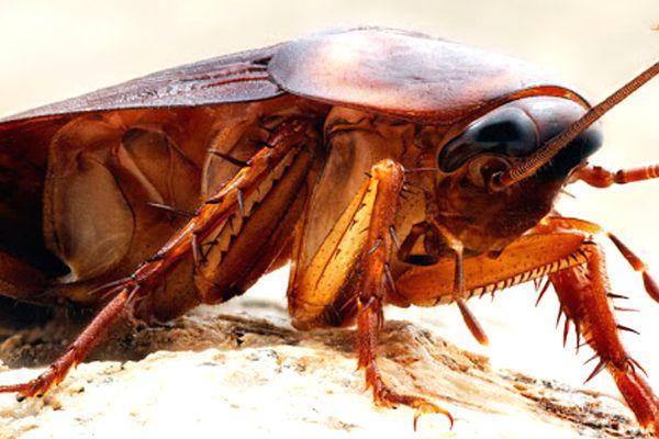 soñar con cucarachas frecuentemente