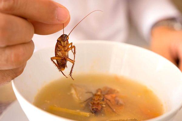 cucarachas en la comida
