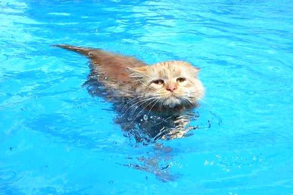 que significa soñar con gatos en el agua