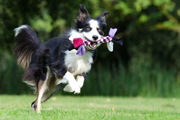 soñar con perros jugando y corriendo