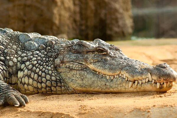 soñar con cocodrilos gigantes que significa