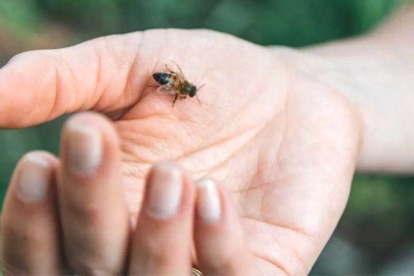 abeja sobre la mano