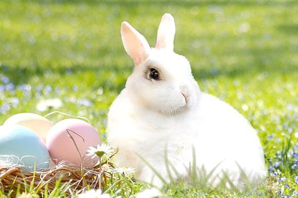 conejo de color blanco