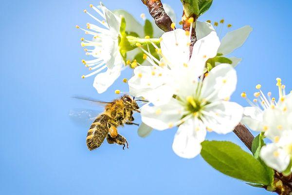 abejas volando