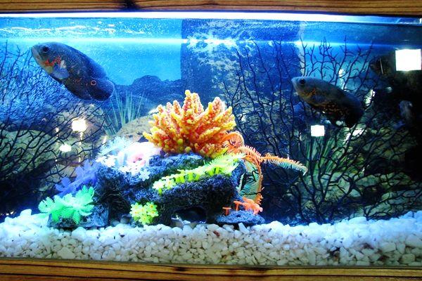 sueños con peces en pecera