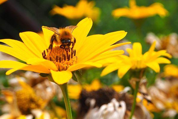 soñar con abejas con frecuencia