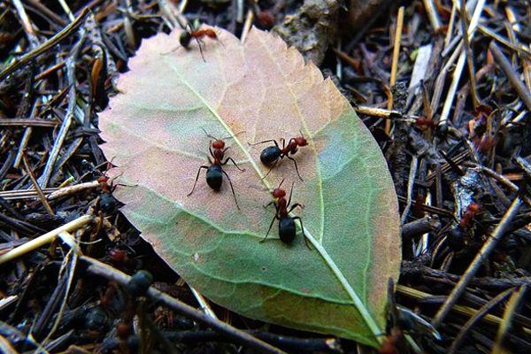 soñar con hormigas frecuentemente