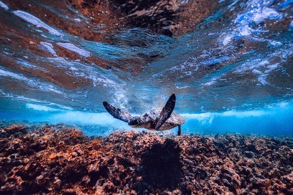 soñar con tortugas frecuentemente