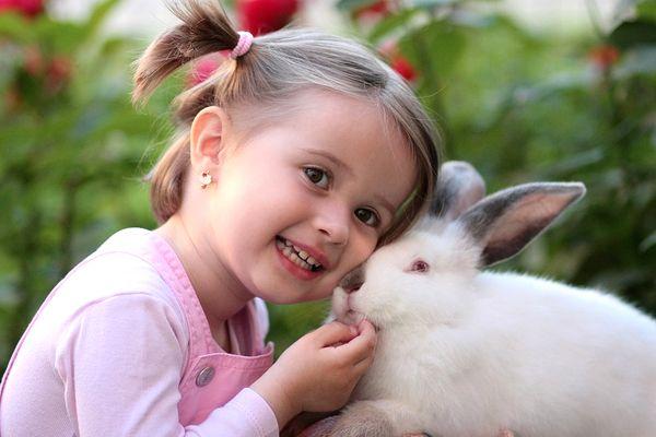 acariciar un conejo