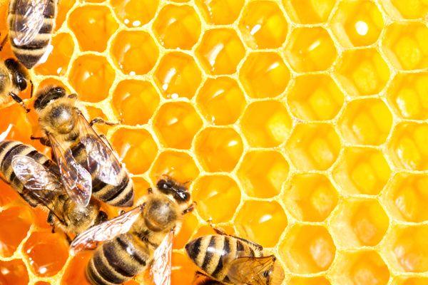 sueños con miel y abejas