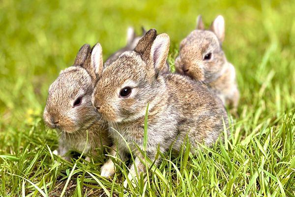 soñar con conejos pequeños