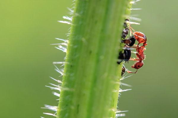 soñar con hormigas subiendo por el tronco de un árbol