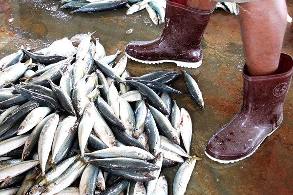 peces fuera del agua