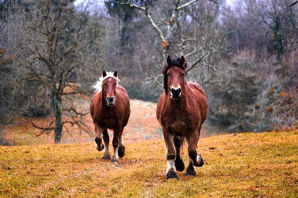 soñar que te persiguen caballos
