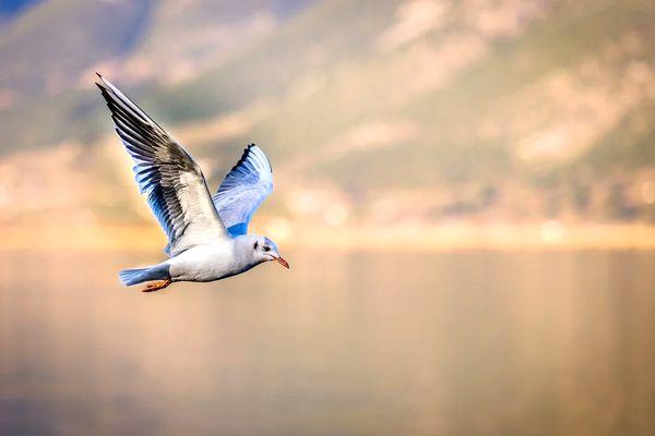 sueños que eres un ave y vuelas