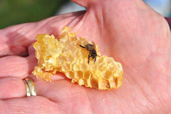 manos con miel