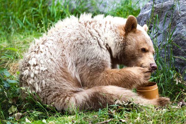 sueños con miel y osos
